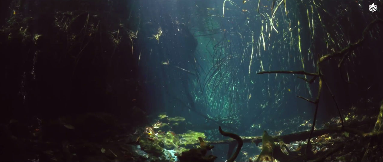 Roots and branches from overhanging vegetation reach down into the cenote's lifegiving waters.