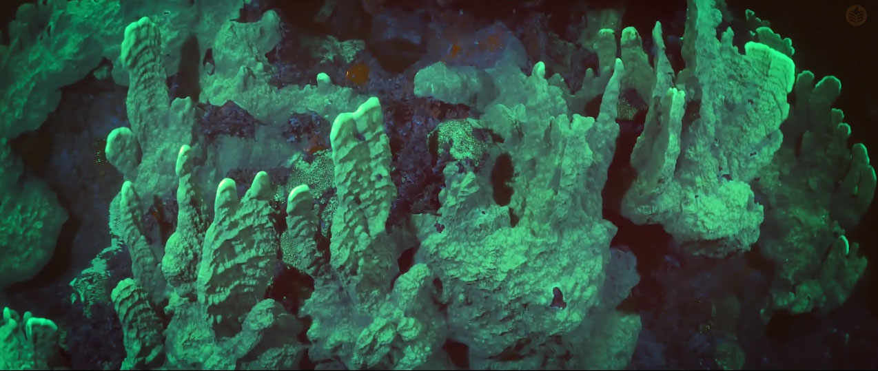 Cara-Kerr has shared fluorescent dive footage before, but the scale of the shots in this film are jarringly impressive.