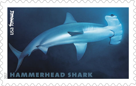 Scalloped Hammerhead Shark (Sphyrna lewini), USPS Stamp
