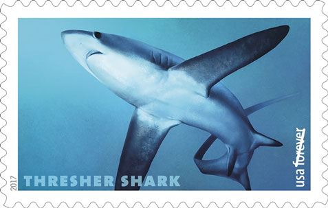 Thresher Shark (Alopias pelagicus), USPS Stamp