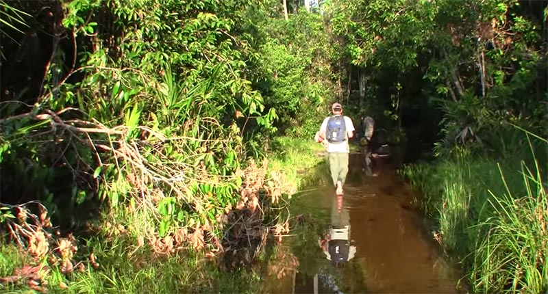 The team heads into the waters of the Caño Vitina...or so they thought.