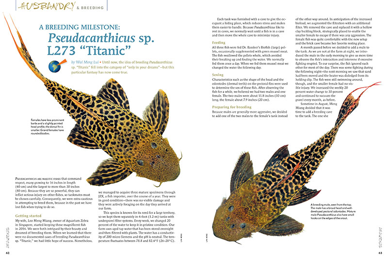 "Until now, the idea of breeding Pseudacanthicussp. ""Titanic"" fell into the category of ""only in your dreams""—but this particular fantasy has now come true. Discover how, in ""A Breeding Milestone: Pseudacanthicus sp. L273 ""Titanic,"""" by Wai Meng Lui."