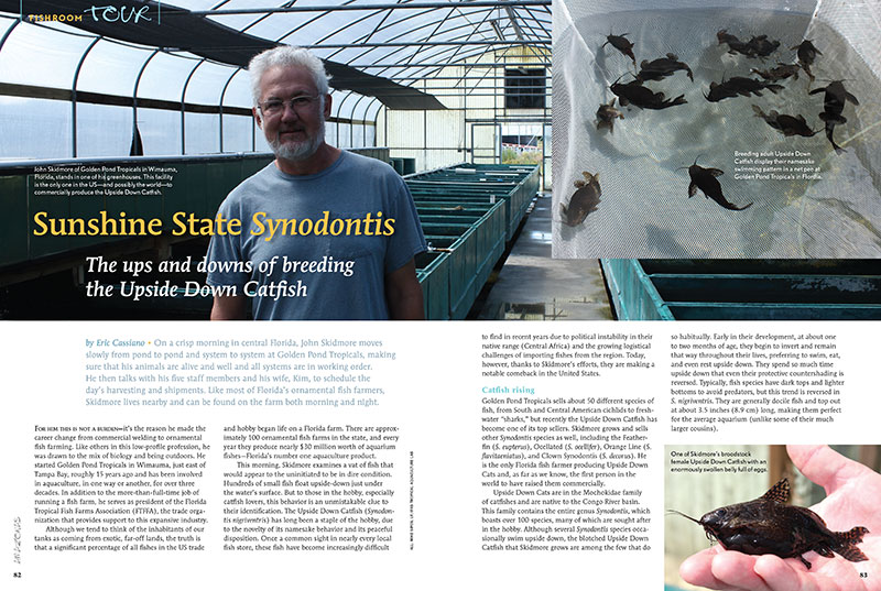 John Skidmore of Golden Pond Tropicals in Wimauma, Florida, stands in one of his greenhouses. This facility is the only one in the US—and possibly the world—to commercially produce the Upside Down Catfish. Author Eric Cassiano shares the ups and downs of breeding the Upside Down Catfish in this issue.