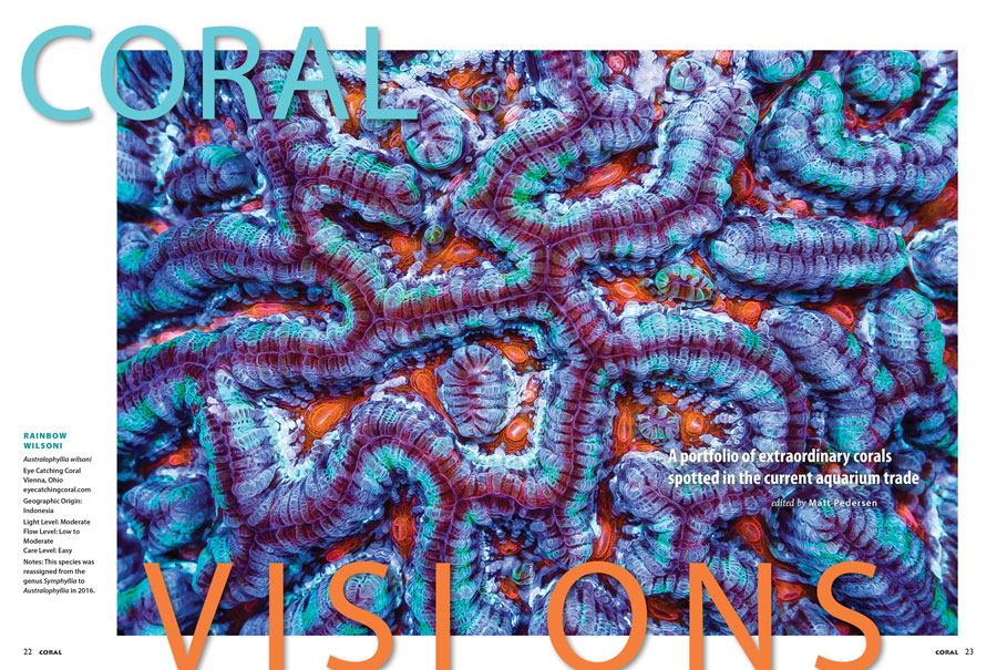 A Rainbow Wilsoni from Indonesia, shared by Eye Catching Corals of Vienna, Ohio, graces the opening spread of our CORAL VISIONS column. Turn the pages of your new issue to catch a glimpse of some of the hottest corals in the market right now, and see more even more that didn't make the final cut in our online bonus for the issue.