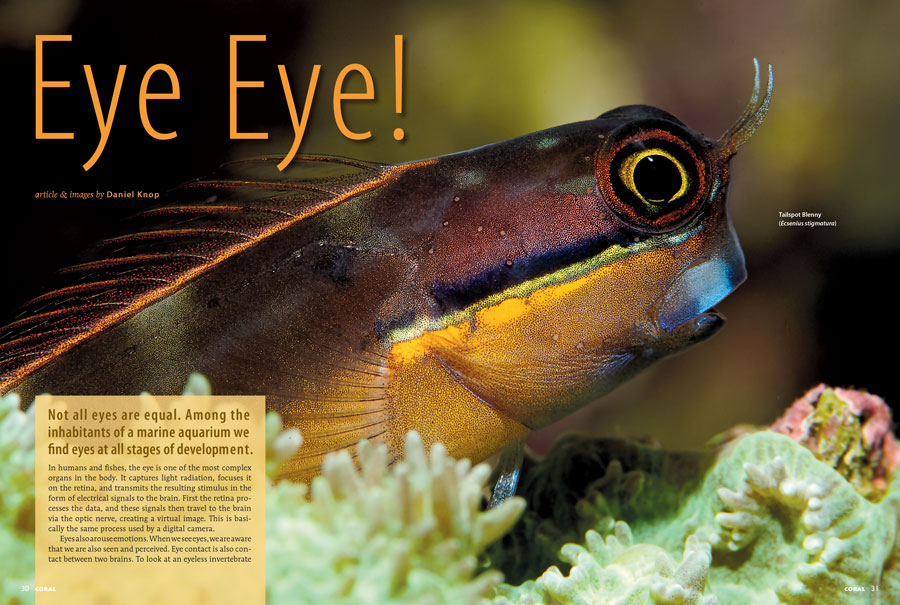 Our cover feature beings with Eye Eye! by Daniel Knop, who notes that not all eyes are equal. Among the inhabitants of a marine aquarium we find eyes at all stages of development.