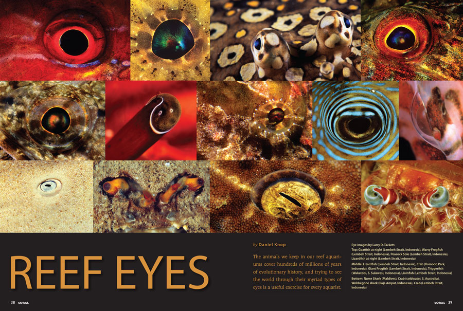 "See the inner workings for many incarnations of nature's ""most pioneering inventions"" as Daniel Knop reveals the secrets of Reef Eyes."