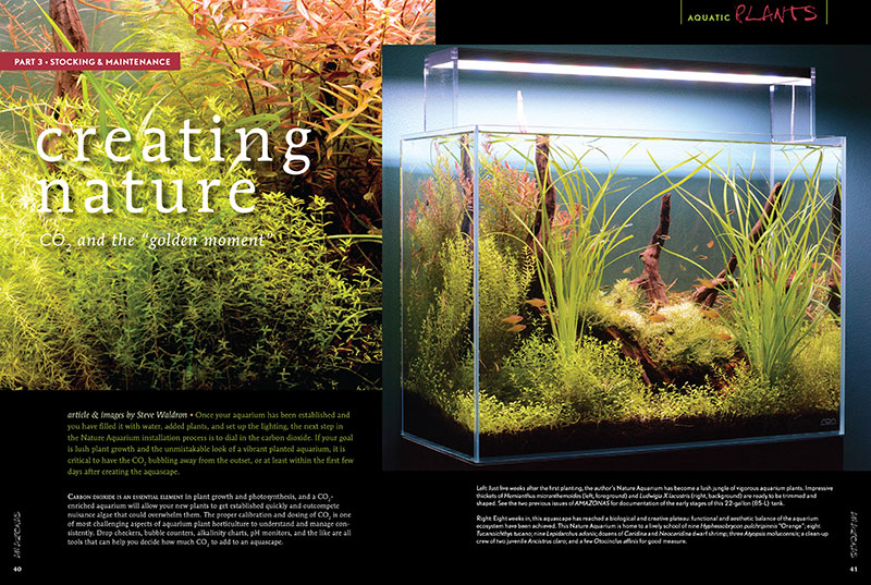 "In our continuing planted aquarium & aquascaping series, Creating Nature, Aquarium Zen's Steve Waldron discusses the application of CO2 and the ""golden moment"" in planted tank keeping."