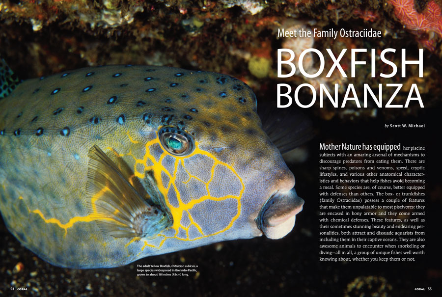 Shielded by bony armor and chemical defenses, author Scott Michael argues that the Boxfishes are a group of unique fishes well worth knowing about, whether you keep them or not.