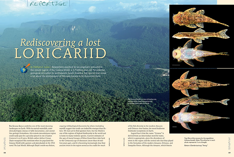 "Have you ever lost anything? Your car keys, your wallet? An entire species of catfish and the river that they come from? Well, it's rather like that: Nathan K. Lujan tells the tale of ""Rediscovering a lost Loricariid."""