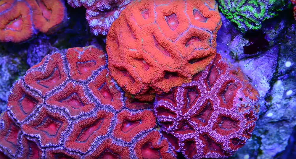 The many shades of red...on display in Ari's 500 gallon as filled by Christopher Jason Studios.