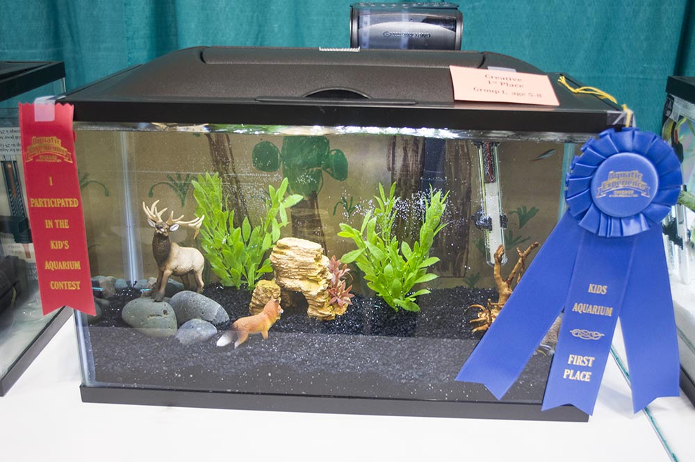 A first place winner in the 2016 Kid's Aquarium Contest at the Aquatic Experience - Chicago. Image - Matt Pedersen