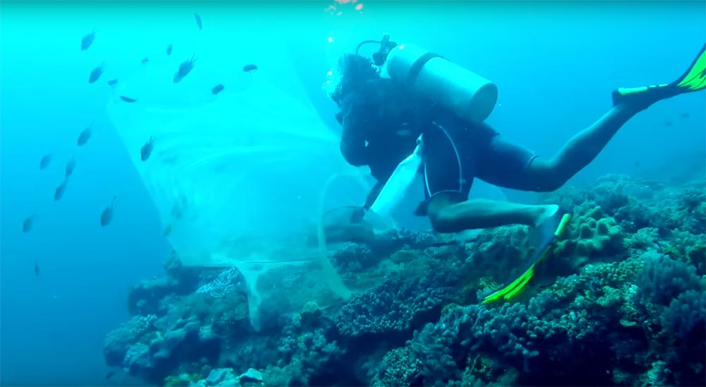A diver fishing a Kenyan coral reef collects aquarium fish using only barrier and hand nets. From footage by Michael Tuccinardi.