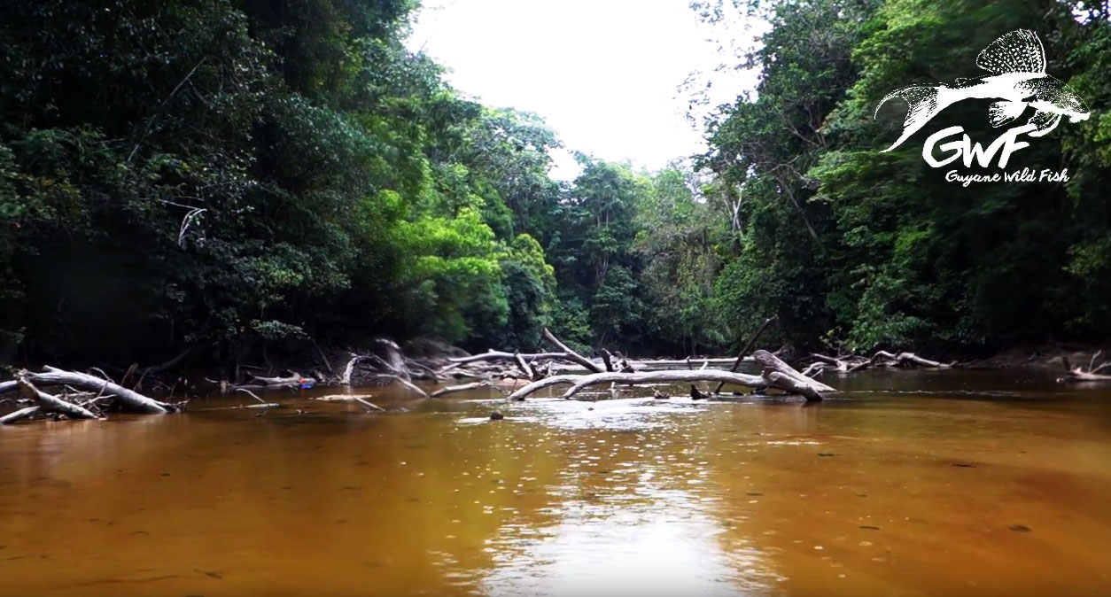 Comté River in French Guiana.