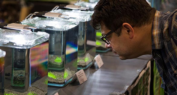 Guests inspect tanks containing strong competitive offerings of freshwater ornamental shrimp at the Aquatic Experience 2016.