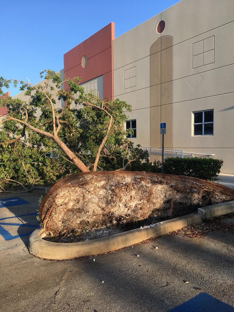 A tree lost outside the Two Little Fishies office.