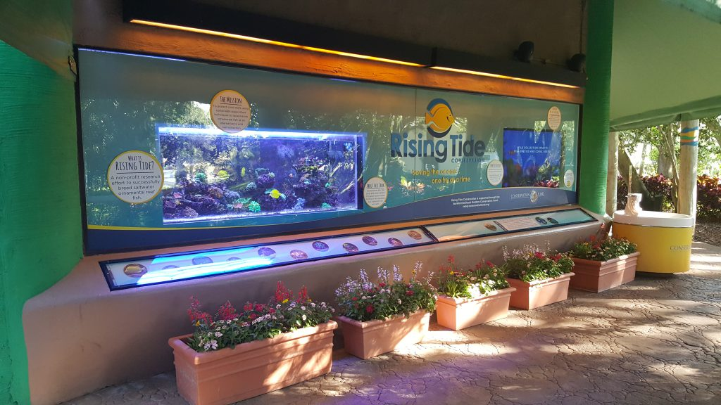 The Rising Tide Reef Aquarium at Busch Gardens in Tampa was unscathed by Hurricane Irma. Image Credit: Busch Gardens