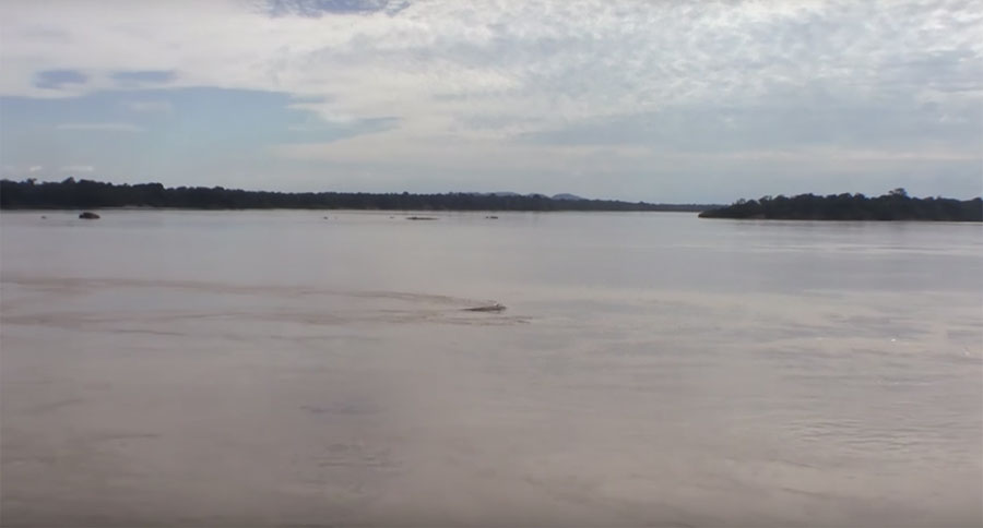 The Rio Orinoco is running high and muddy; hardly ideal for fish collection.