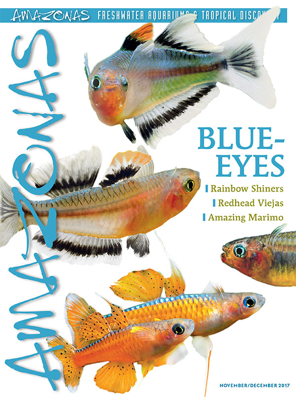A gorgeous issue arriving now: the cover of AMAZONAS Magazine, Volume 6, Number 6, BLUE-EYES. On the cover: Pseudomugil conniae and P. luminatus by Hans-Georg Evers.