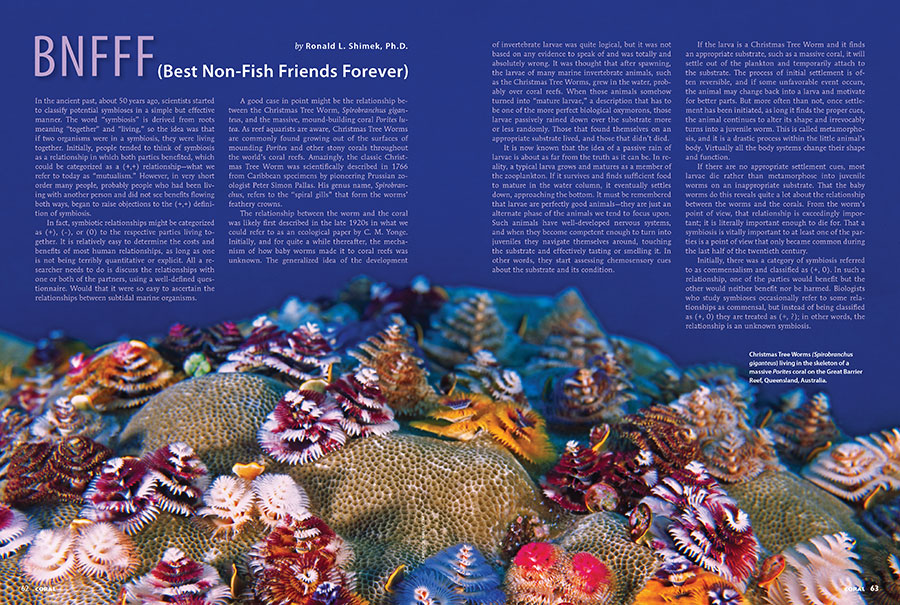 "Dr. Ron Shimek's look at the life and times of the Bisma Worm is not to be missed. But pay heed to his warning, ""the purchase of a 'Christmas Tree Worm Rock'...conveys a responsibility to provide for both the worms and the coral...which have very different appetites and husbandry requirements."" Learn more in his article, ""BNFFF: (Best Non-Fish Friends Forever)."""