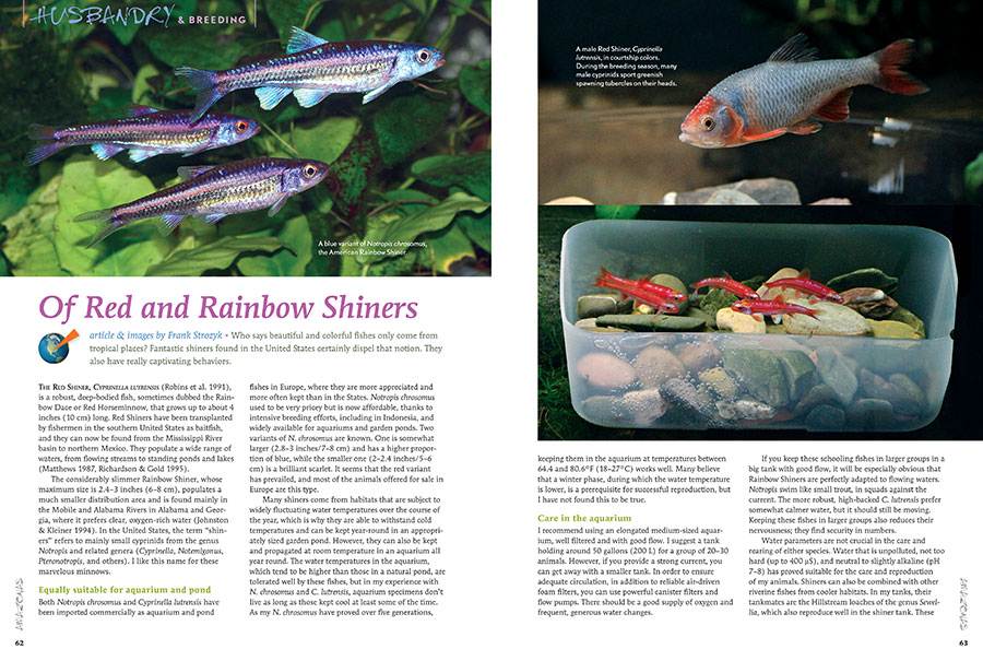"Enthusiasts of North American native fishes get a double helping of Shiner appreciation with Frank Strozyk's article ""Of Red and Rainbow Shiners."" Experience these worthy aquarium residents in the pages of our new issue."