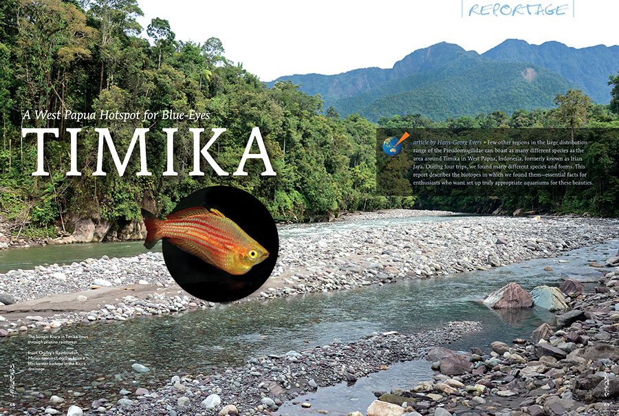 Hans-Georg Evers journeys to Timika, West Papua, Indonesia, and returns with a report describing the biotopes for many different Blue-Eye Rainbowfishes—essential facts for enthusiasts who want to set up truly appropriate aquariums for these beauties. Get all the details in the new issue of AMAZONAS.