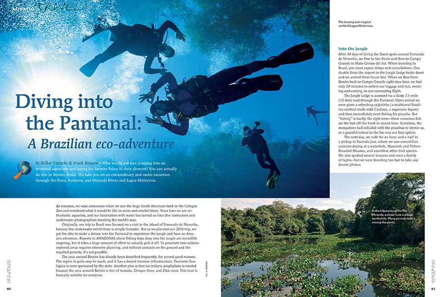 Who wouldn't love jumping into an oversized aquarium and seeing his or her favorite fishes in their element? You can actually do this in Bonito, Brazil. Dive the Pantanal with Volker Vierecke and Frank Rossow in the new issue of AMAZONAS.