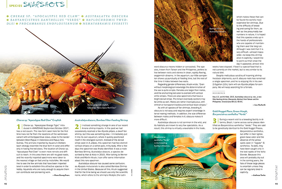 "AMAZONAS Magazine's must-read Species Snapshots reveals the newest and most interesting freshwater fish coming into the aquarium trade. In this issue: Apocalypse Red Claw Crayfish (Cherax sp.), Bamboo Filter-Feeding Shrimp (Australatya obscura), a rare Green Morph of the Gold Nugget Pleco (Baryancistrus xanthellus ""Verde""), Tweddle's Hap (Haplochromis tweddlei), the American Black Mottled Crayfish (Procambarus enoplosternum), and Everett's Giant Danio (Nematabramis everetti)."