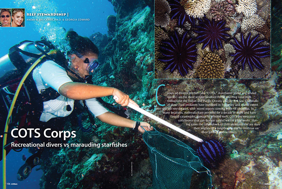 In the wake of bleaching events, Crown of Thorns Starfish (COTS) expand their appetites to corals they normally pass over. Coral Reef CPR teams up with recreational divers to see whether they can have an impact on COTS populations. Find out if the strategy was successful in the story from Dr. Andrew Bruckner & Georgia Coward.