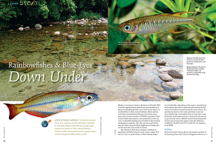 Journey to Australia with author Ronny Lundkvist to discover Rainbowfishes & Blue-Eyes Down Under: Exclusively in our newest issue.