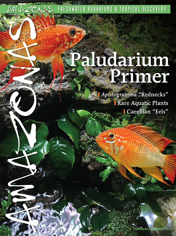 "An invigorating start to 2018 and our 7th year, AMAZONAS Magazine, Volume 7, Number 1, PALUDARIUM PRIMER. On the cover: In the background, the Paludarium of Sam Rutka, and two male Apistogramma macmasteri ""Vieja Redneck"" by Hans-Georg Evers."
