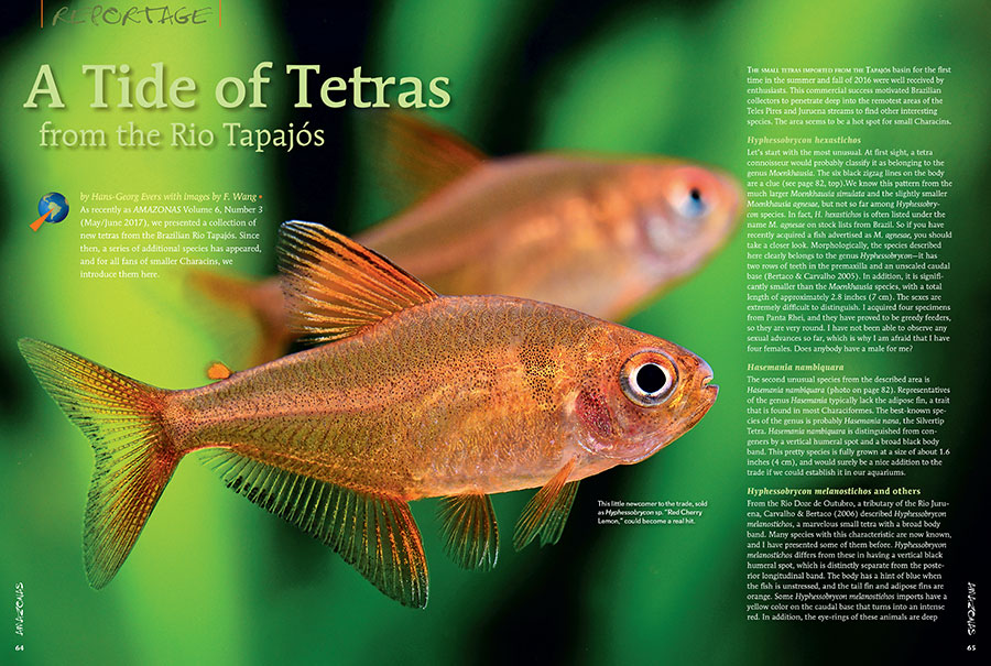 Hans-George Evers and F. Wang introduce several small tetras imported for the first time from the Tapajós basin. Commercial success has motivated Brazilian collectors to penetrate deep into the remotest areas of the Teles Pires and Juruena streams to find other interesting species.