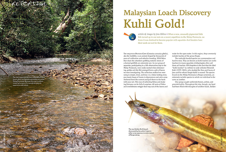 You thought you knew everything there was to know about Kuhli Loaches? Well, Jens Kühne just struck Gold!