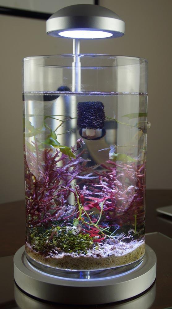 The new PJ Reefs 2.0 Deluxe Mini Seahorse Aquarium