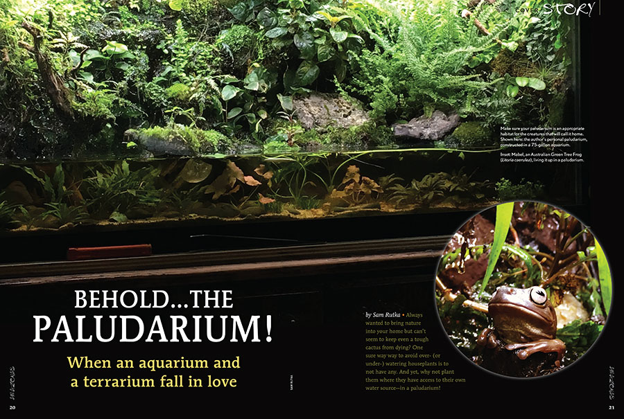 First-time contributor Sam Rutka brings us our cover story: Behold...The Paludarium: When an aquarium and terrarium fall in love.