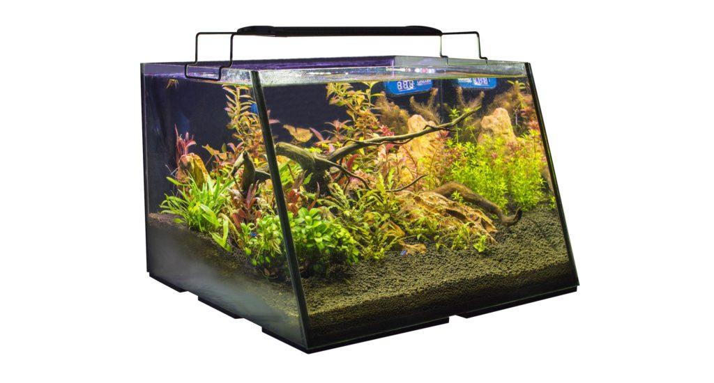 The Lifegard Full View Aquarium, shown here as a freshwater planted aquarium.
