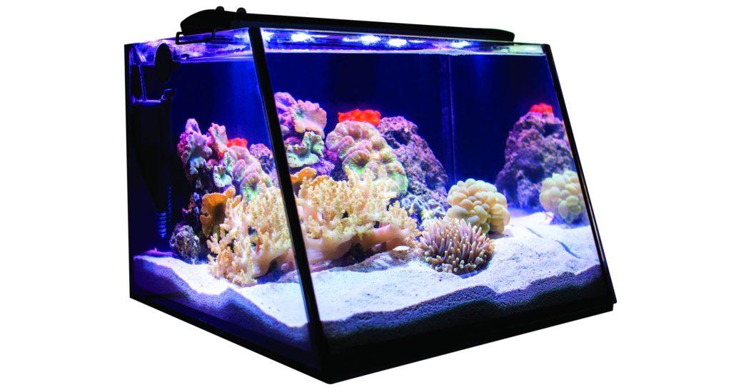 The Lifegard Full View Aquarium, here running as a reef tank.