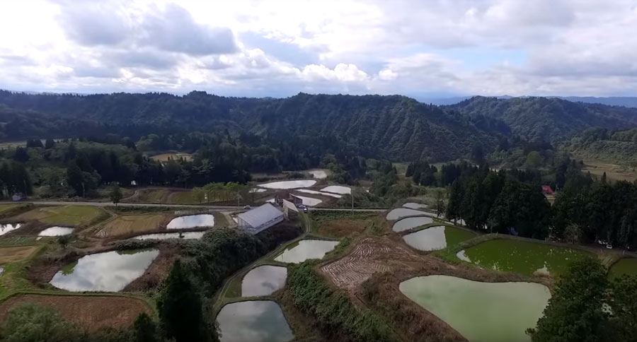 A soaring view of Fukasawa Koi Farm, nestled among the rolling green hills of Niigata.