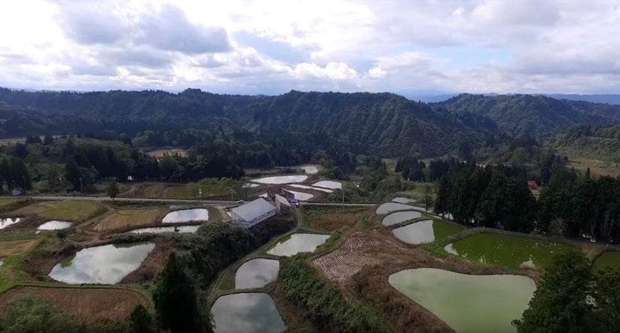 A soaring view of Fukasawa Koi Farm, nestled among the rolling green hills of Niigata.