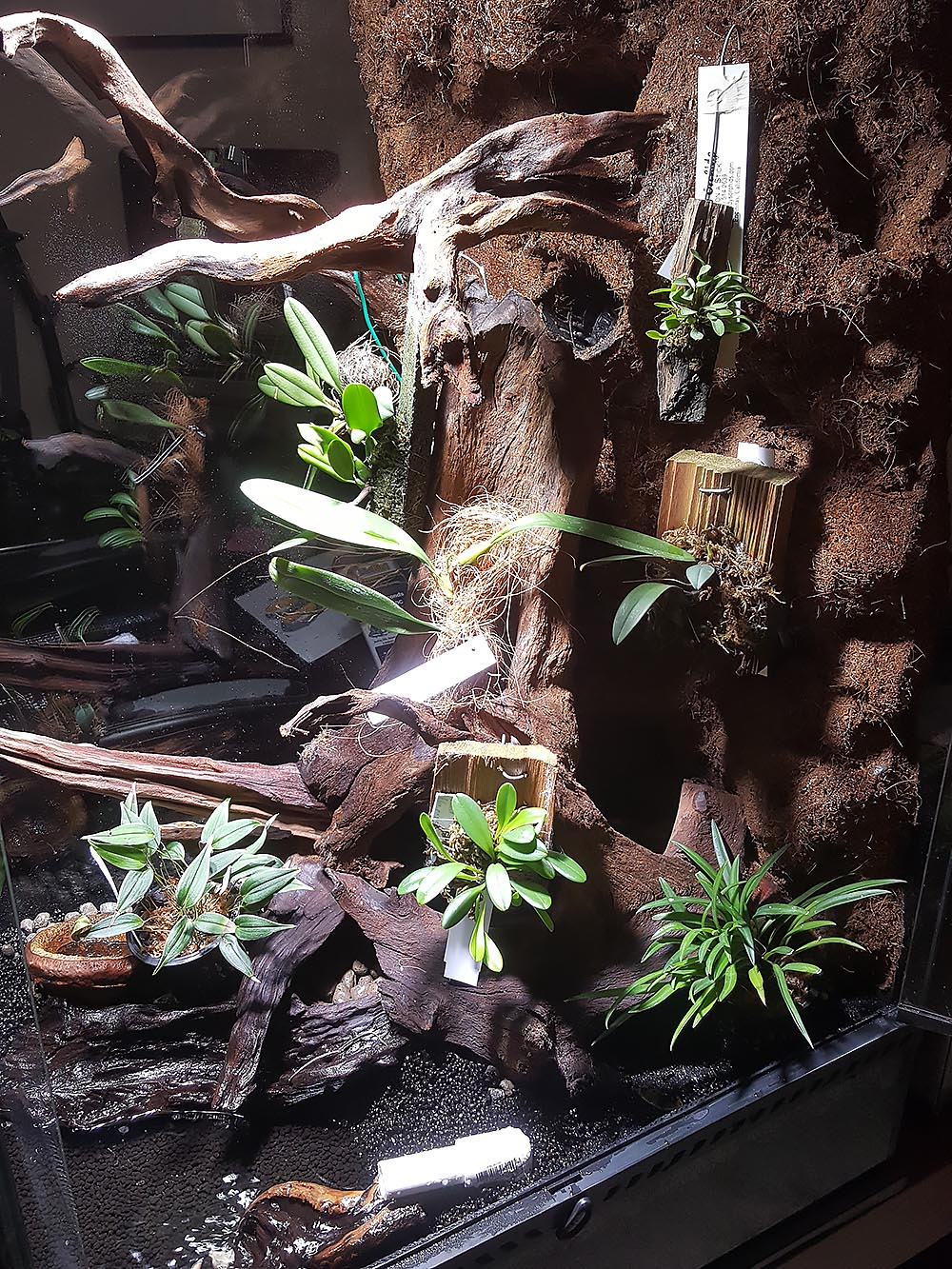 The vivarium receives its first plants; orchids still mounted as they arrived, acclimating to life in the vivarium before being selected for more permanent mounting.