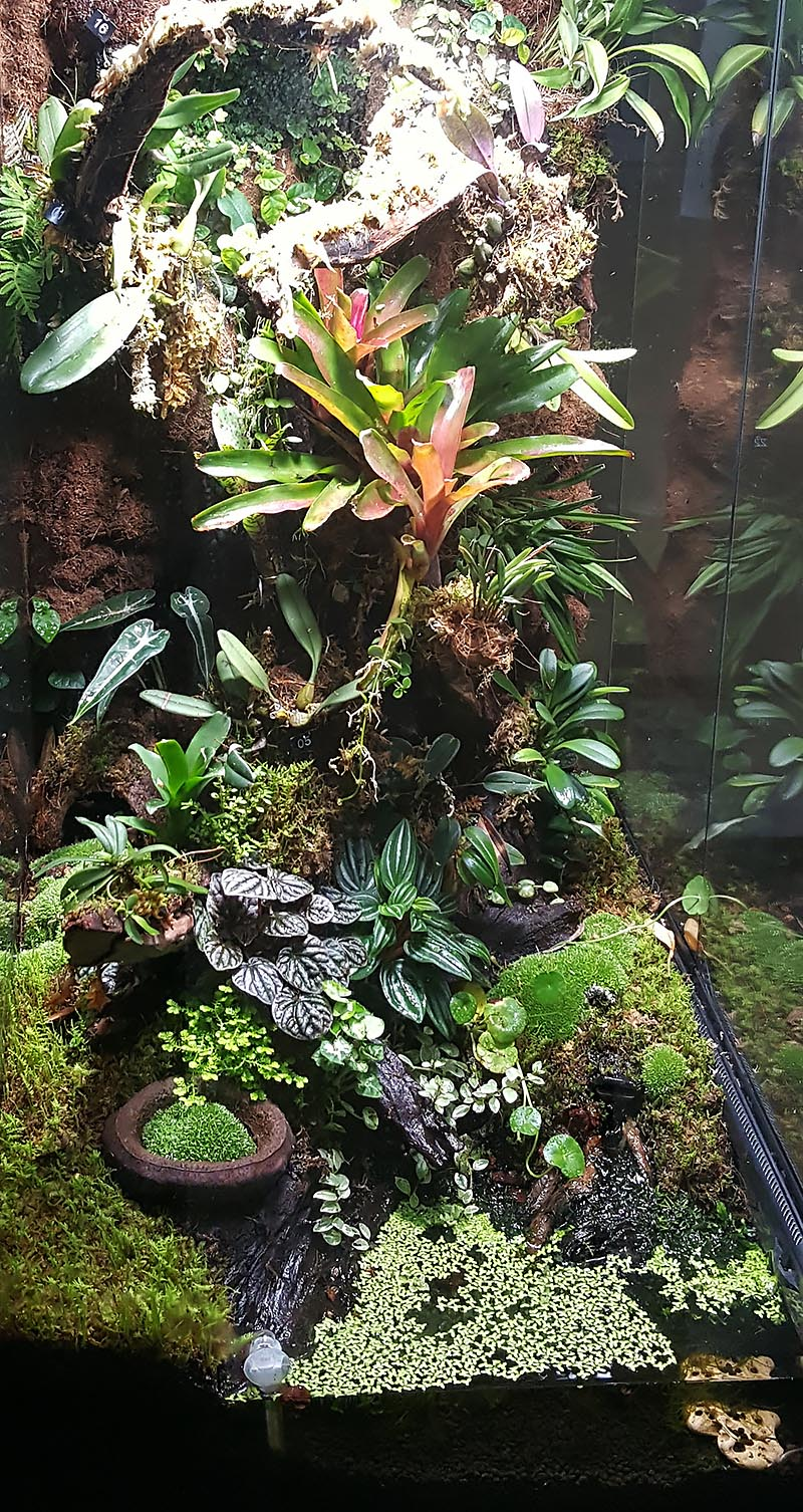 The small pond at the base of Dr. Adeljean Ho's orchid-filled vertical vivarium houses even more secrets.