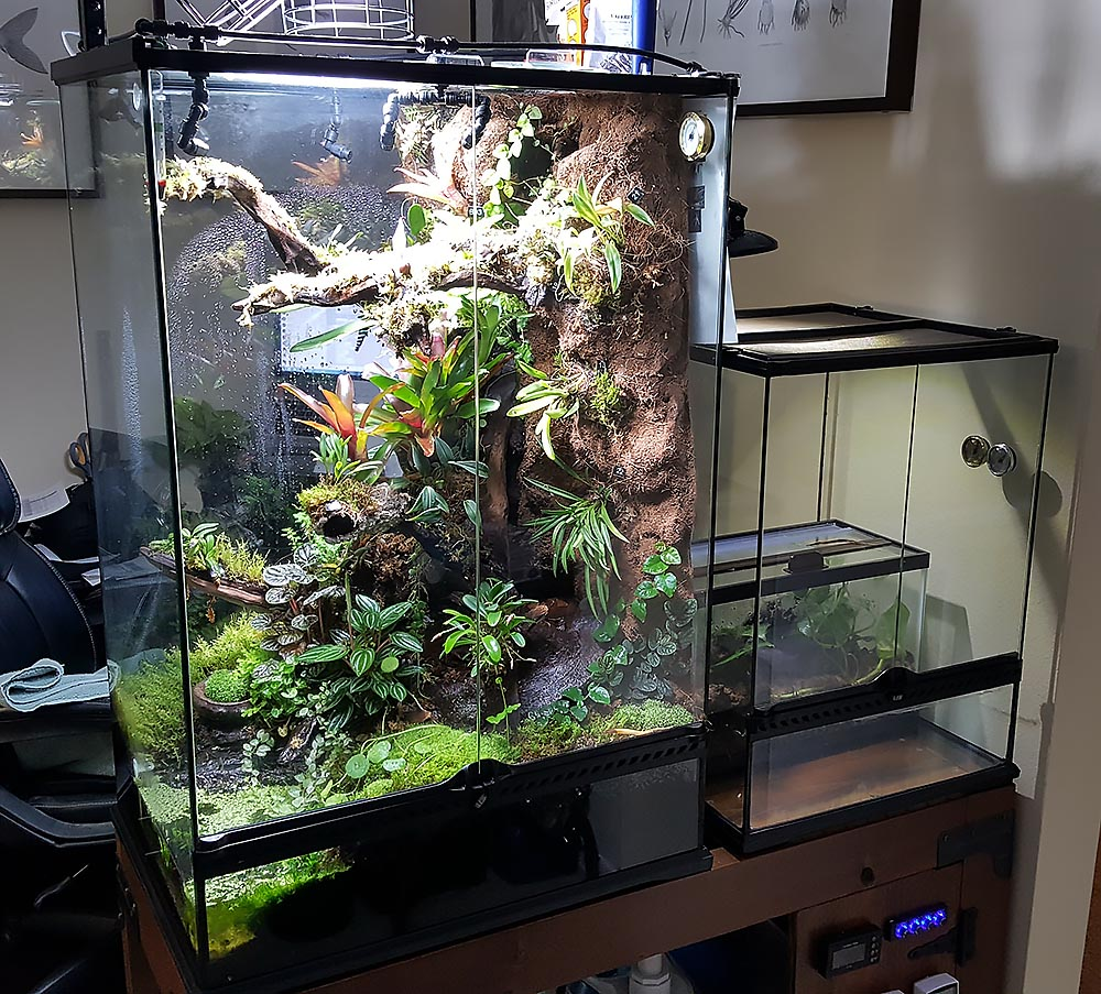 The ever-expanding collection of vivariums; another smaller system is currently in the works to house more orchids and a smaller variety of thumbnail dart frog.