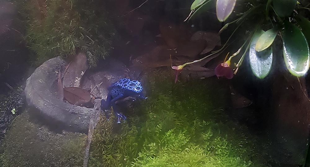 Seen through the mist: miniature orchids, mosses and Azureus Dart Frogs flourish alongside a small pond in the office vivarium of Dr. Adeljean Ho.