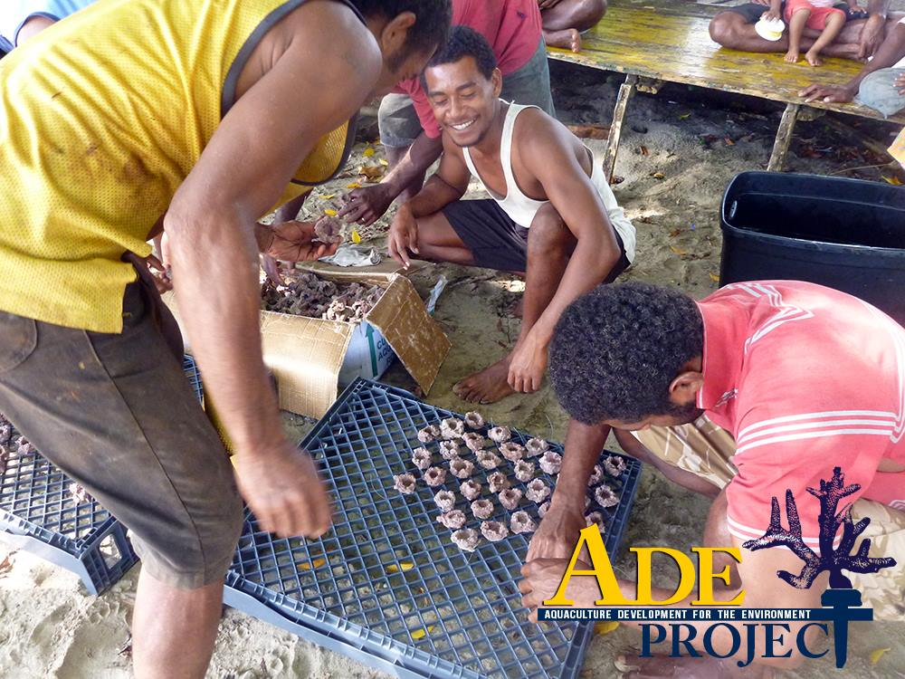 Working under the guidance of the ADE Project, these Fijian villagers prepare to clone stony reef-building corals. The villagers will grow the coral cuttings to a larger size before planting them on struggling reefs in Fiji.
