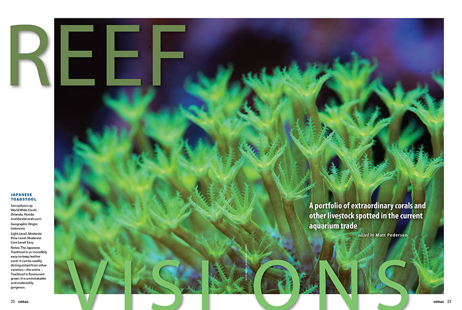 World Wide Corals seized the first opening spread of 2018 with this stunning macro photo of a Japanese Toadstool Leather Coral. You'll have to open this issue to see what other corals made the cut to kick off the new year.