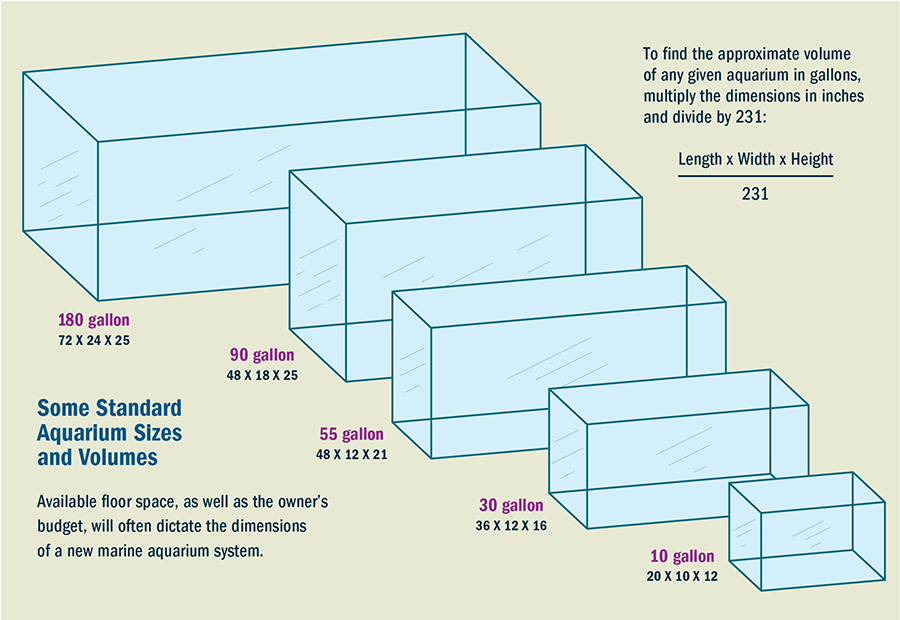 Aquarium sizes for Fish tank sizes