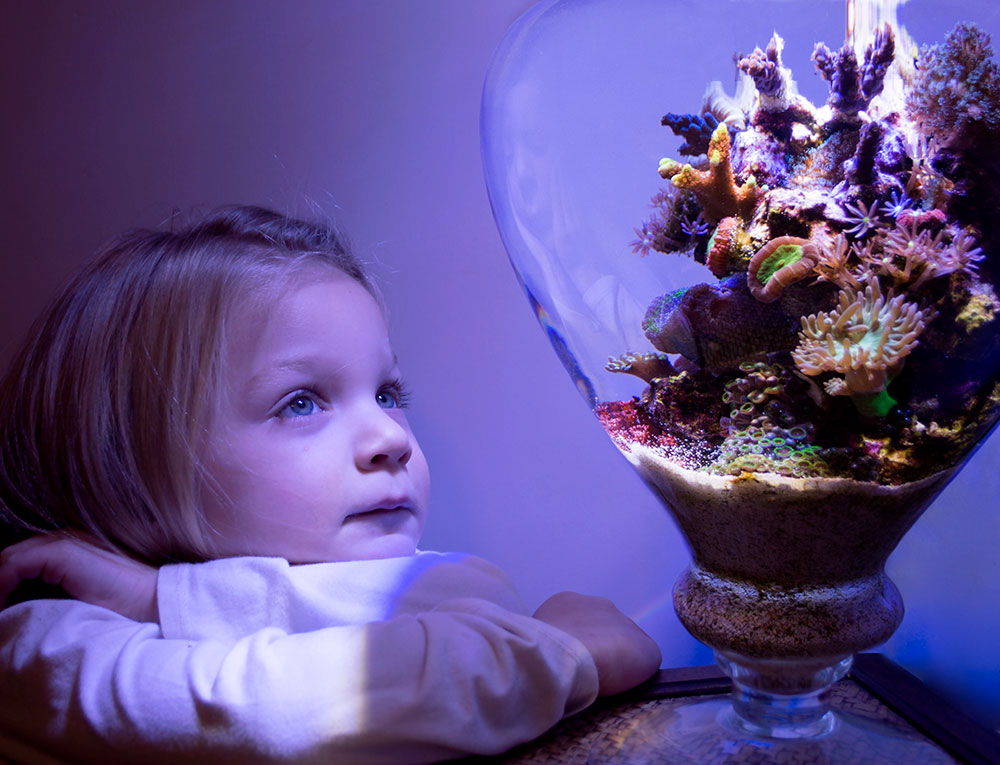 "Audrey ""AJ"" Pedersen, age 4, with her dad's 4-month-old, 1.25-gallon reef vase. Says Matt Pedersen: ""It's far from bulletproof, but it's still been one of the easiest, most successful reefs I've ever set up."""