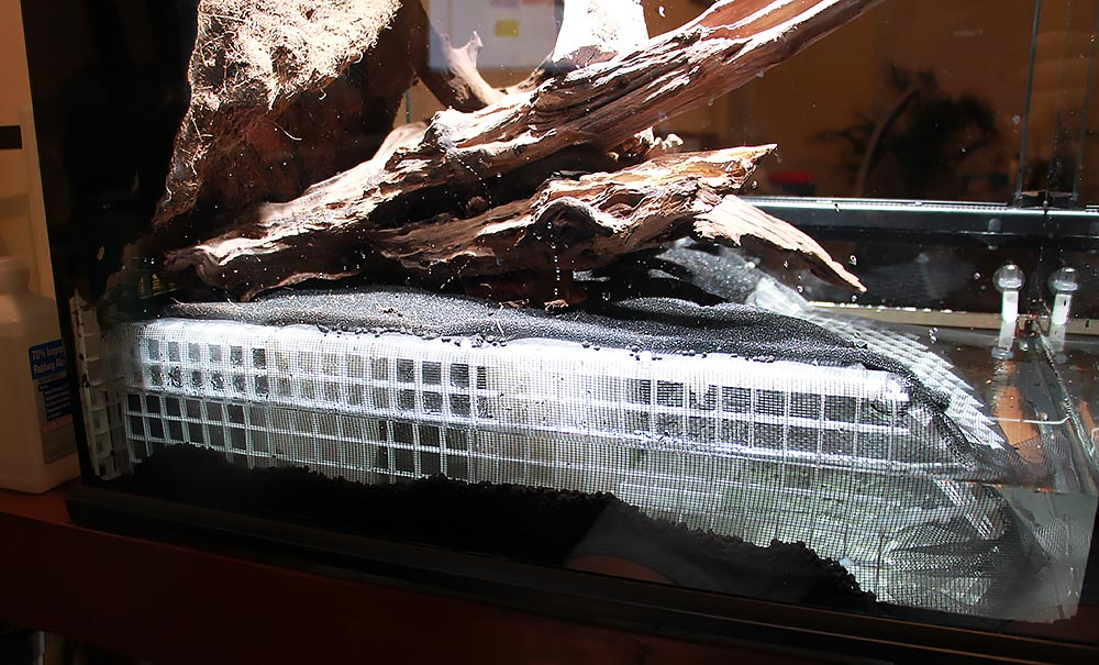 Water testing. Note that the false bottom stops short, and does not extend to the very edge and the glass. Fluval substrate is added alongside to conceal the structure from view.