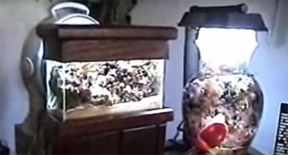 Brandon Mason's Micro Reefs, circa 2007