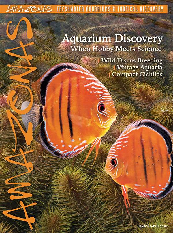 AMAZONAS Magazine, Volume 7, Number 1, AQUARIUM DISCOVERY, highlights the interconnected world of science and the aquarium keeping hobby.. On the cover: Wild-Caught Discus from Peter Glunz, with a background of Rotala wallichii, photographed by Michael J. Tuccinardi.