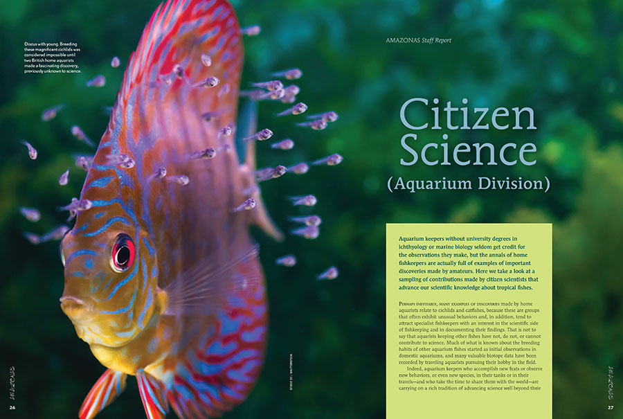 CITIZEN SCIENCE (Aquarium Division): Aquarium keepers without university degrees in ichthyology or marine biology seldom get credit for the observations they make, but the annals of home fishkeepers are actually full of examples of important discoveries made by amateurs.